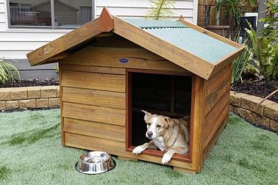 Solidny dom dla psa