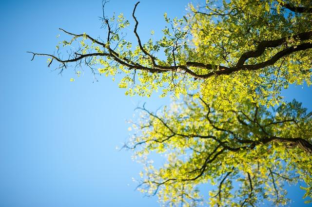 Przycinanie krzewów i drzew